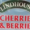 Lindhouse Cherries & Berries Double Strength Squash